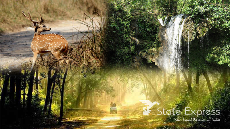 safari tours in India